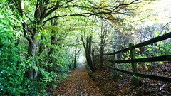 Top Path, Tree Tunnel (Mark BJ) Tags: daisynook countrypark boodlewood path fence autumn leaves manchester uk oldham ashtonunderlyne