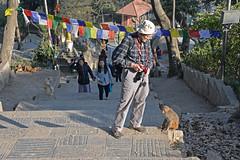 DSC_3438monkey (BasiaBM) Tags: swayambhunath monkey temple kathmandu nepal