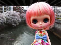 Cherry blossom petals swirl 6