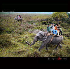 elephant Safari at Kaziranga National Park (ribinroy) Tags: park elephant safari national assam kaziranga