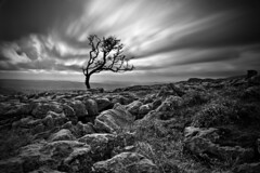 Twistleton Tree (John Ormerod) Tags: longexposure wild england sky blackandwhite bw cloud motion tree landscape mono interestingness interesting movement nikon rocks flickr wind monochromatic explore filter le isolated northyorkshire ingleton explored 10stop nd110 d7000 twistletonscar