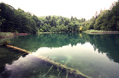 Plitvice (frasse21) Tags: reflection tree nature water landscape europe reserve croatia plitvice