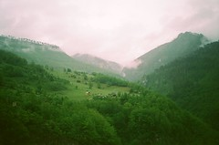 43050017 (msvoid) Tags: mountains forest yashica montenegro yashicat4