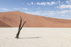 Dead acacia tree at Deadvlei (michael_wohlfarth) Tags: sand dunes namibia sossusvlei deadvlei
