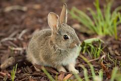 (mhawkins) Tags: bunny yard