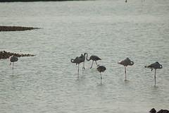 DSC_9447 (lecielrouge) Tags: spain wildlife july naturereserve eurotrip lamarina 2013 elpinet