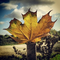 IMG_20131006_124538 (Francesco Carta) Tags: autumn sky closeup leaf samsung dry nopeople tone cloudscape