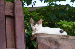 Sua estranha... (brunacarolinab) Tags: white cat gatobranco