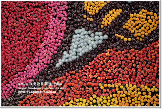 고양국제꽃박람회009