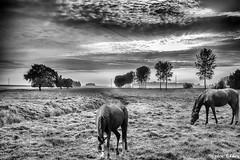 Horses Grazing (stephenomara) Tags: red sky horses horse food orange grass feeding dusk feed grazing lovelysky