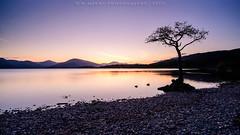 Chapter 2: One Tree (w.mekwi photography) Tags: uk sunset shadow lake tree water silhouette landscape scotland dusk peaceful serene loch lomond idyllic leefilters milarrochybay nikond800 wmekwiphotography 52weeksof2015