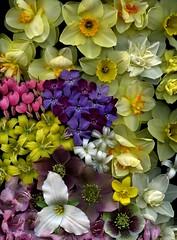 56633.01 flowers (horticultural art) Tags: flowers springflowers horticulturalart