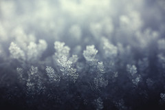 macro snowscape (Schneggart) Tags: snowscape snow macro crystal cold winter
