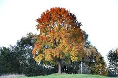 Tree in the Sun (benjaminfuchs) Tags: 18250 sigma 650d macro canon eos sun tree