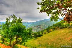 Manzara (zulkifaltin) Tags: kahramanmara bykimal trkolu ky village nature doa tepe da aa tree hdr