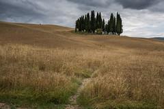 there you are (T N K) Tags: siena trees vista senesi crete grove cluster valdorcia cypress italia