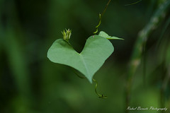 """Being in Love with Nature"" (rahulboraste) Tags: rahulborastephotography heart love nature"