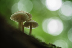 Below the mushrooms (aj_nicolson) Tags: agaricales basidiomycota fungi cap mushroom pileus appicoftheweek softness soft nature closeup bokeh
