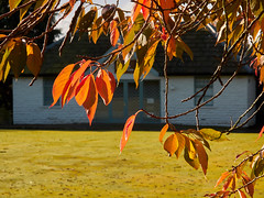 Leaves Turning (scottprice16) Tags: england lancashire clitheroe clitheroecastle castlepark bowlinggreen tree leaves autumn colour october morning sunshine calm cafe bokeh canong10 ribblevalley