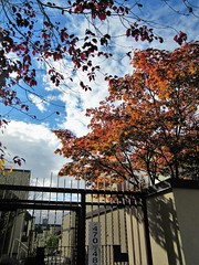 McLean Park Housing (SqueakyMarmot) Tags: vancouver strathcona eastpenderstreet publichousing autumn trees colourful