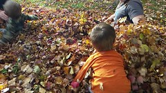 Leaf me alone (M.J.H. photography) Tags: fall leaves leafpile slowmotion slomo video child kid shannon boy lucien play learn ct staffordvillect connecticut