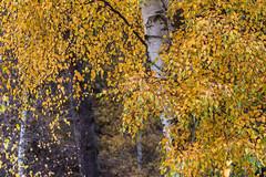 RSPB Sandy-3 (Malcolm_Graham) Tags: autumn colours autumncolours sandy thelodge