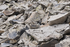 """American Pika • <a style=""""font-size:0.8em;"""" href=""""http://www.flickr.com/photos/63501323@N07/30421387036/"""" target=""""_blank"""">View on Flickr</a>"""