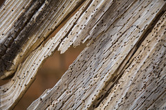 Madera carcomida. Gaarul, Aragn, Espaa. (www.rojoverdeyazul.es) Tags: gaarul aragn espaa autor lvaro bueno madera wood carcoma applegrub zona rural rstico antiguo rustic ancient