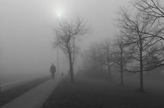 November Fog (Doris Burfind) Tags: fog november people street sidewalk dog blackandwhitemist outdoor georgetown haltonhills