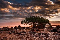Town beach mangrove Tree (Richard Mart1n) Tags: landscape nikon d5000 travel broome westernaustralia australia beach mangrove