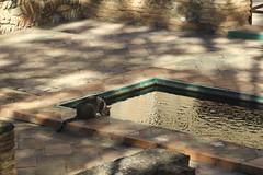 El agua deseada (Micheo) Tags: granada spain carmendelosmrtires agua water paseo walk gato cat thirsty sediento sed