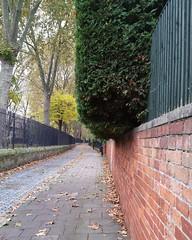 Big bush Stepney Green (Carol B London) Tags: bigbush bush e1 londone1 stepney stepneygreen
