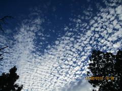IMG_1019 (StormJunkie2015) Tags: clouds sky weather skies altocumulus cumulus alto meteorology