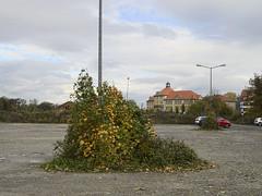 Harz_e-m10_100B067908 (Torben*) Tags: rawtherapee olympusomdem10 olympusm25mmf18 wernigerode harz busch scrub bush