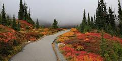 Autumn Colors on Mt. Rainier, (3 of 3) (louelke - on and off) Tags: mtrainier paradise pacificnorthwest autumn autumncolors washingtonstate mtrainiernationalpark foggy hiking trail