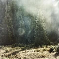 droplets of light (jssteak) Tags: canon t1i square mountains forest trees glare lightleak grunge aged fog