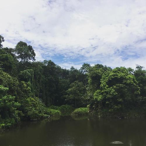 Wetlands @ #frim