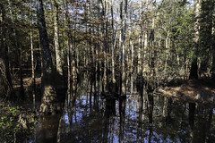 Cypress Slough 1 (Scott Sanford) Tags: 6d bigthicket canon cypress eos easttexas nature outdoor reflection texas water contrast dark moody plants swamp trees ef2470f28l topazlabs sunlight lightandshadows