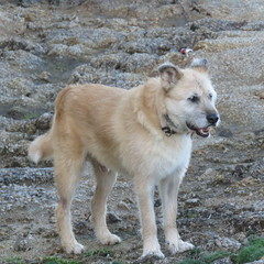 aqu estoy yo (jesust793) Tags: perros dogs mascotas animales