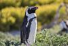 20160914-154323 (Luca Pisciotta (Luca Shotts)) Tags: capetown westerncape sudafrica za canon 7d mark ii 180 macro f35 l canon7dmarkii 7dmarkii
