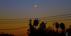Santa Monica Super Moon (Brett Landrum) Tags: super moon santamonica santa monica losangeles los angeles lunar dawn gradient photography canon canon7d 7d silhouette early morning
