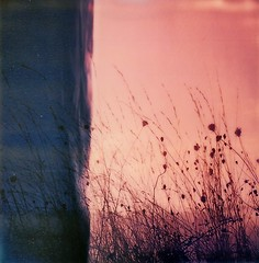 (Martin PEREZ 68) Tags: nature sunrise herbes polaroid polaroidsx70 sx70 instantfilmcolor instant instantan expired