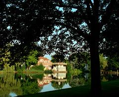 Tree in Broek.jpg (Joo Caetano Dias) Tags: europa europe holanda sombras broekinwaterland tonalidades