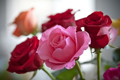 Mother's Day bouquet (TheNickster) Tags: pink flowers red roses rose bouquet mothersday