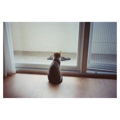 [ ] (Kerb 汪) Tags: home cat january hana analogue murmur miao kerb 2012 konicac35 konicac35ef homhome 201201 f1010034 konicacenturiadnp200 konicac35film035 kerbwang 驊陽10112130