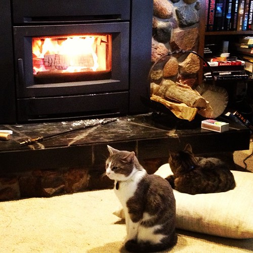 Fireplace cats