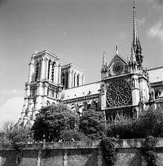 Nortre Dame (Purple Field) Tags: street bw paris france 120 6x6 tlr film church monochrome analog rolleiflex square kodak trix 400tx medium   f28  schneider kreuznach 80mm   28f   xenotar         stphotographia x