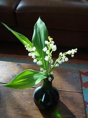 Lilly of the Valley !!! - on Explore - (Pifou 2010) Tags: flowers light white paris france green fleurs couleurs vert lumiere muguet chezmoi lillyofthevalley 2013 gerardbeaulieu pifou2010