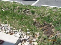 IMG_0811 (Stormwater Maintenance, LLC) Tags: erosion problem curbcut bioretention