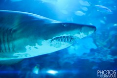 Trip to Aquaria 2013 (soulie) Tags: fish aquarium toddler sharks educational klcc aquaria
